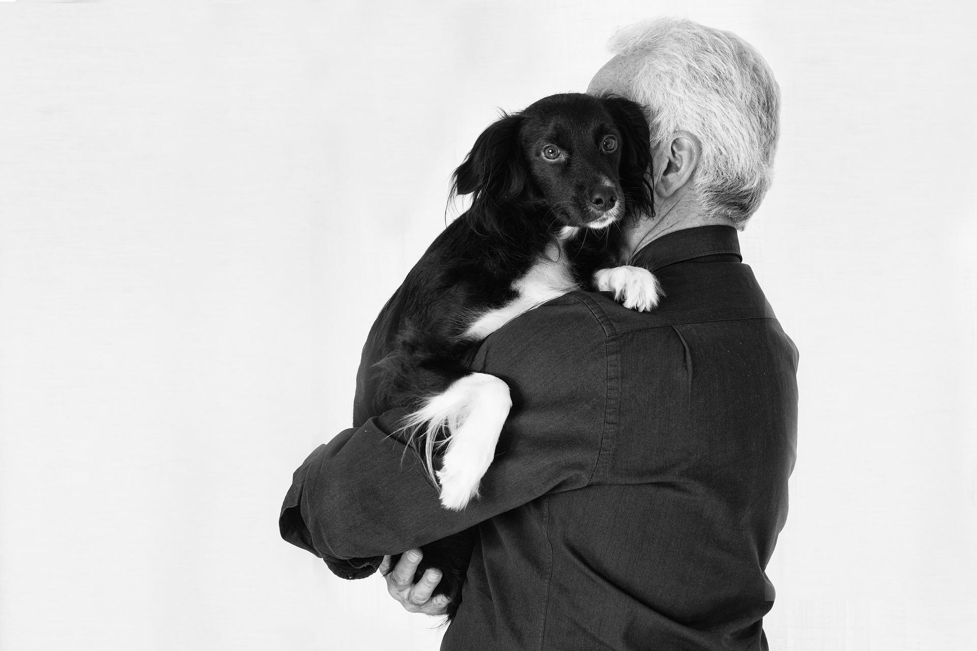 pet-Image by Jose Antonio Alba from Pixabay